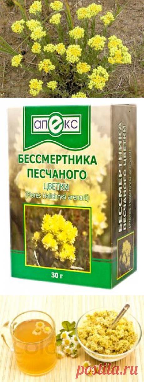 Бессмертник - лечебные свойства и противопоказания травы