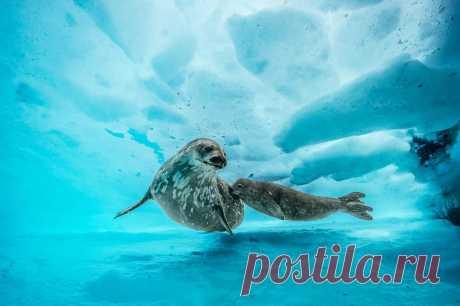 Deepest Dive Under Antarctica Reveals a Shockingly Vibrant World