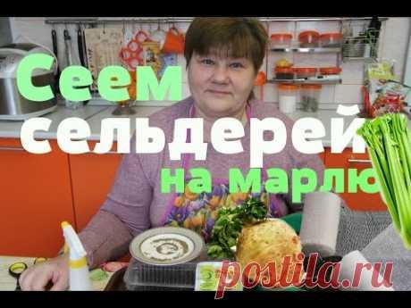 Сеем сельдерей на марлю.Отличный результат! (21.02.16 г.) - YouTube