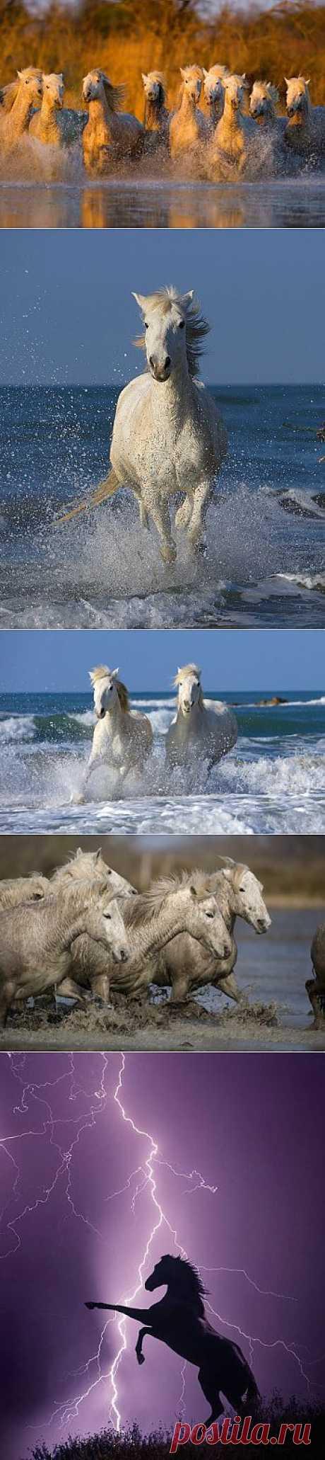 Лошади от Jim Zuckerman (7 красивых фотографий) » Зверушки.ру
