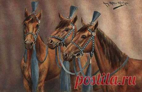 цирковые+лошади - 38 тыс. картинок - Поиск Mail.Ru