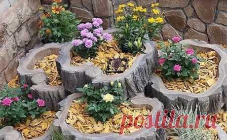 Когда и пень цветет — Сделай сам, идеи для творчества - DIY Ideas