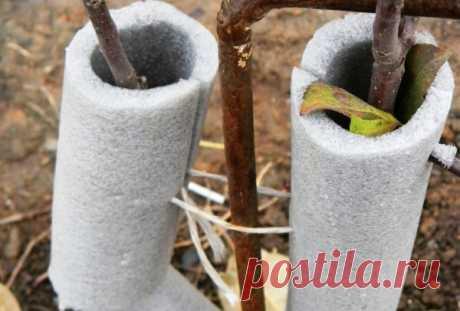 Как укрыть яблоню на зиму, чтобы она пережила холод Основным этапом в подготовке к зиме является утепление и укрытие деревьев. Если вы пока ещё новичок, наши советы подскажут вам как укрыть яблони на зиму