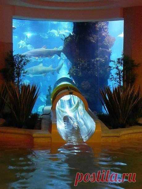 А вот эта водная  горка,  проходит сквозь огромный аквариум  в котором большое разнообразие обитателей океанов.  В том числе и акулы. Вы представляете промчаться мимо них.  Вот для них удивительное рядом. Даже испугаться не успеют.  Они… или вы…
