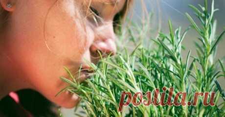Cамая мощная трава для мозгового кровообращения, сердца, сосудов, надпочечников, суставов, кожи, волос и не только! Много столетий это растение лечит артрит, подагру, астму, экзему, заболевания печени, желчного пузыря, сердца, ожирение… Оно помогает восстановить организм после тяжелых болезней! Люди много столетий лечат артрит, подагру, астму, экзему, заболевания печени, желчного пузыря, сердца…... Читай дальше на сайте. Жми подробнее ➡