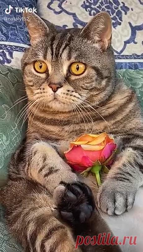 Какой шикарный и красивый котик