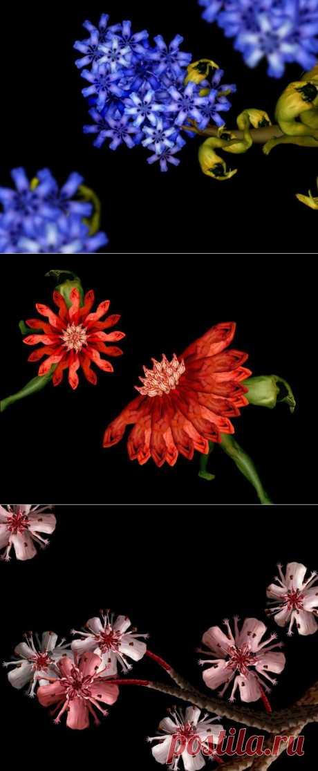 Цветы из девушек. 18+.