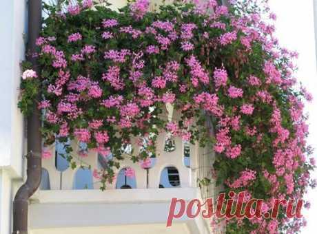 Балконные цветы – какие лучше выбрать