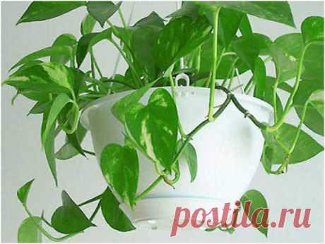 Комнатные растения — ваша судьба на подоконнике | Невероятно, но факт!
