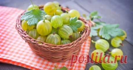 What to prepare from a gooseberry for the winter – 9 incredibly tasty roll-in the Gooseberry – very unusual berry, remarkable not only the external similarity to a water-melon, but also special taste. How to keep this taste and to regale on berries in cold winter evenings? Read article and learn.
