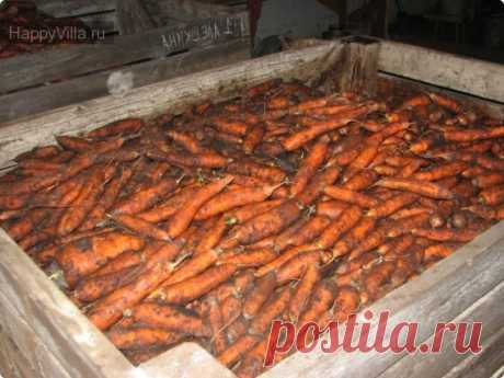 Reliable granaries: how to put and to correctly store carrots