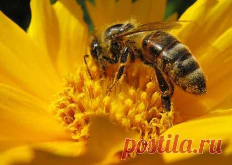 10 популярных декоративных растений, которые бесполезны для пчел