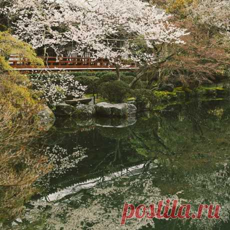 Киото — это та самая таинственная и ускользающая Япония, что вот уже несколько столетий будоражащая умы европейцев. Городу чудесным образом удалось сохранить наследие минувших эпох — древние храмы, целые районы традиционных деревянных домов-матия, сады камней, чайные домики и звуки японской лютни.