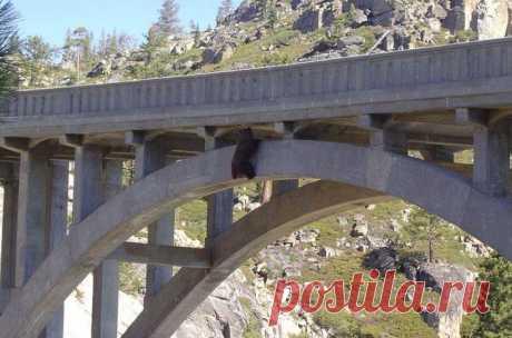 Спасение медведя, который сутки провисел под мостом цепляясь за жизнь