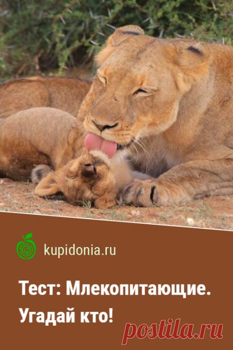 Тест: Млекопитающие. Угадай кто!. Интересный тест о разных млекопитающих. Проверьте свои знания!