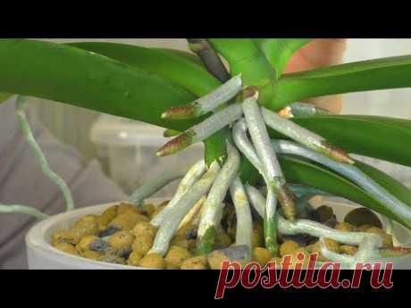 """Как правильно омолодить Орхидею ??? Подробная поэтапная пересадка Орхидеи """"Средних лет""""😊"""