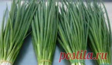 Я больше не покупаю зеленый лук. Два необычных способа вырастить зеленые перья без использования земли. Если вы любите зелень в любое время года, один из этих удивительных способов – для вас! Что необходимо: луковицы зола или активированный уголь