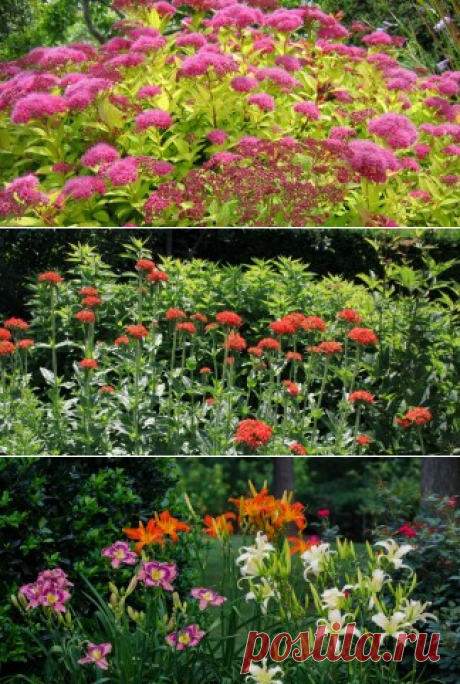 Flower bed and landscape. Ornamental plants and design - Ботаничка.ru