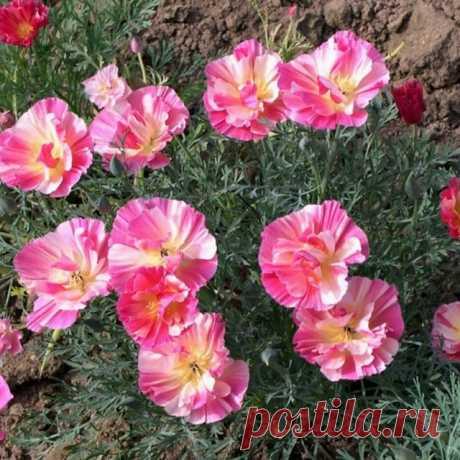 На данном изображении может находиться: цветок, растение, природа и на улице