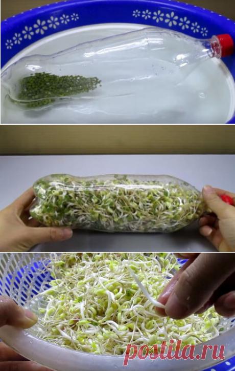 Удивительный лайфхак! Использование пластиковой бутылки для выращивания ростков бобовых… | В темпі життя