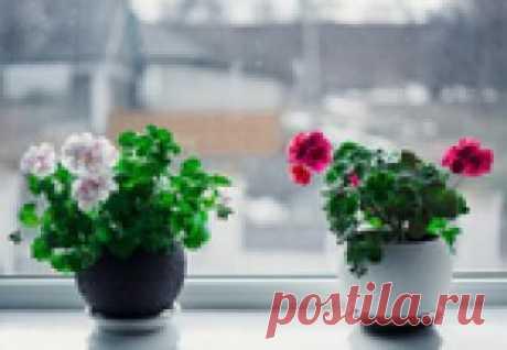 Перекись водорода для комнатных цветов-бальзам в зимнее время