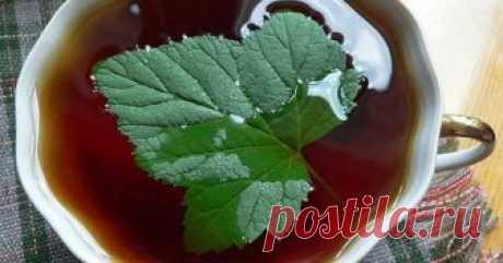 Из листьев черной смородины не первый год делаю ферментированный чай. Хочу поделится рецептом! Чаепитие — занятие не только приятное, но и полезное. Особенно, если напиток заваренный из натуральных листьев какой-нибудь душистой травы, будь то малина, земляника, черная смородина или что-то иное. Вдвойне приятно пить такой чай на даче после выматывающего «фитнеса» на грядках.  Чай из смородин