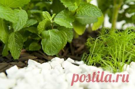 DIY herb garden idea - Grow a herbal tea garden in a large pot at home