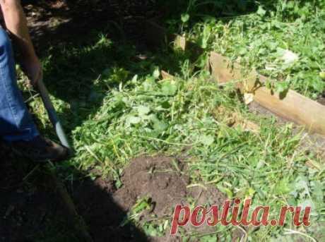 Как заделывать сидераты в почву: когда это делать осенью, под зиму (+отзывы)