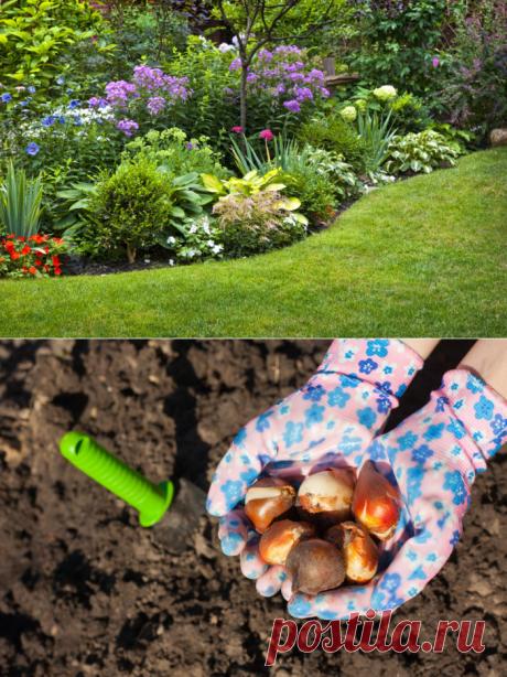 Сентябрь: пора работы с луковичными и многолетними растениями