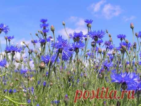 Собираем цветки и травы в июне В июне все травы пускаются в рост, стремительно набирая целебные силы. В некоторых растениях уже накопилось максимальное количество полезных веществ. Эти травы нужно собрать, заготовить и сохранить именно в июне.
