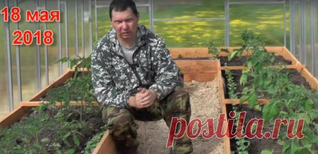 Чем подкормить томаты после высадки в грунт | Пчеловед | Яндекс Дзен