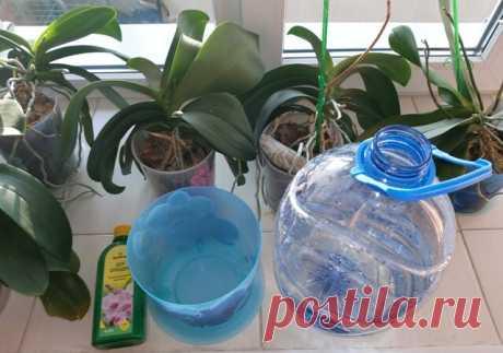 Как просто поливать орхидеи.   Klumba-plus.ru   Яндекс Дзен
