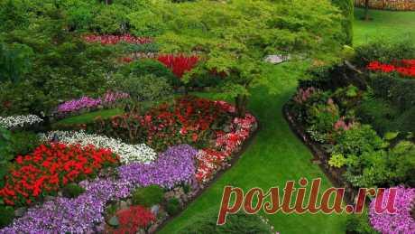 Клумба непрерывного цветения: сроки посева однолетних цветов в таблицах.