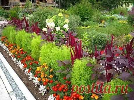 (406) Какие низкорослые многолетники посадить, чтобы цвели все лето   Дача - впрок   МОЙ ОГОРОД, ЦВЕТЫ