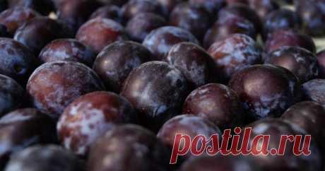 5 полезных свойств сливы — Субботний Рамблер