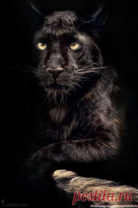 Портреты животных из раздела Животные в интернет журнале zabort.ru