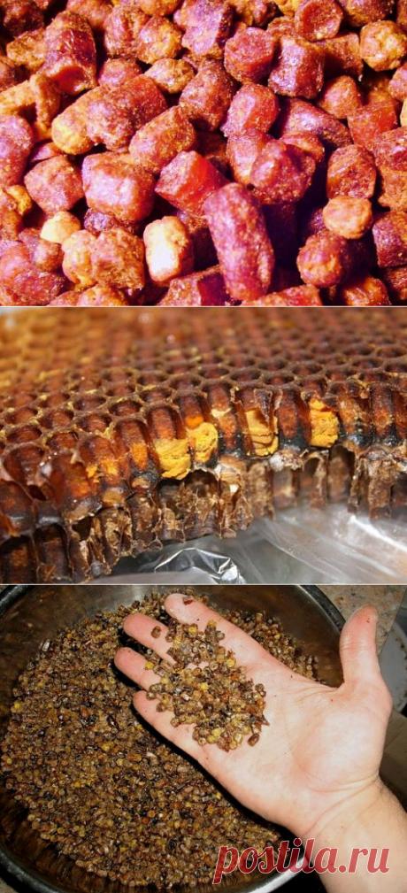 Пчелиная перга - что это, полезные свойства, как принимать