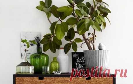 10 лучших быстрорастущих комнатных растений. Список с фото — Ботаничка.ru