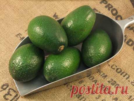 13 причин употреблять авокадо каждый день. После прочтения невозможно перестать его есть… - Кейс советов