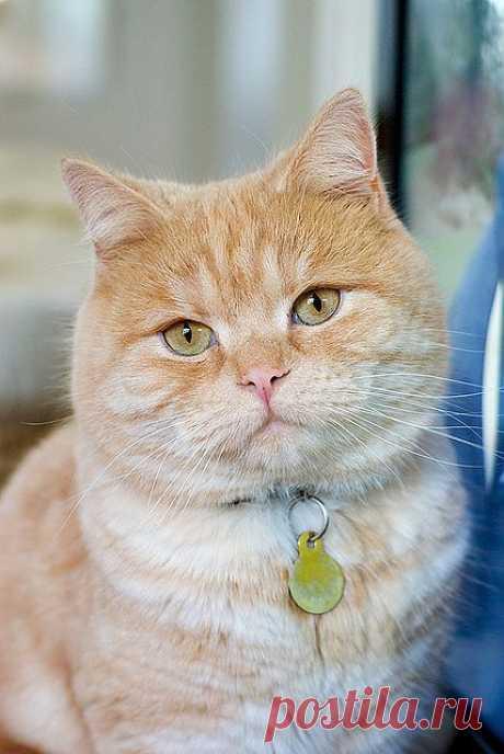 Котик   Flickr - Photo Sharing!