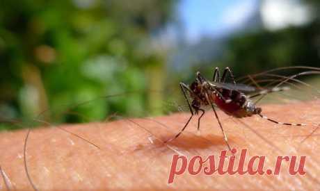 Народные средства от комаров в доме и на природе. Чтобы потом не считать укусы комаров на теле, лучше вовсе их не подпускать к себе. Вот 8 «убийственных» ароматов, запах которых комары просто не переносят