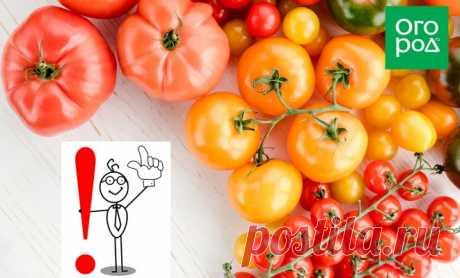 Топ-40 ошибок при выращивании томатов: грабли, на которые наступают почти все   Личный опыт (Огород.ru)