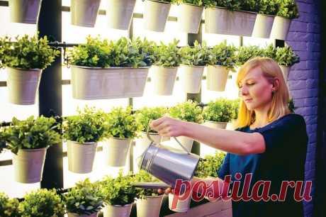 Увидев, как я выращиваю капусту, морковь и другие растения без земли на обычном подоконнике, соседка стала делать так же . Милая Я