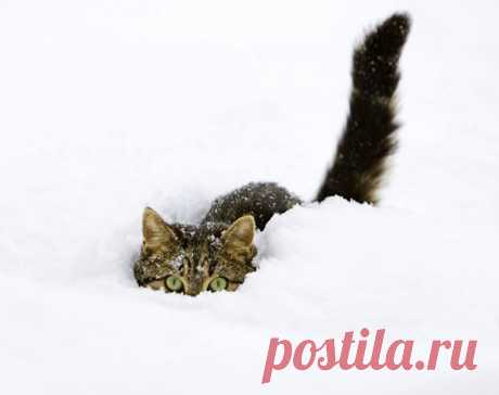 30 Cats In Snow