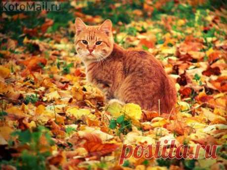 И рыжий кот похож на лист осенний