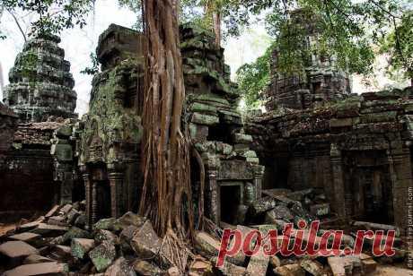 Гигантские деревья в камбоджийском храме Та Пром | Newpix.ru - позитивный интернет-журнал