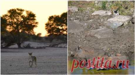 Дикие африканские животные на снимках Стивена Довера . Тут забавно !!!