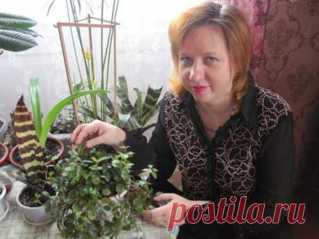 Ирина Донцова
