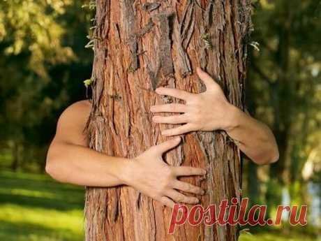 Целительная сила деревьев... - медиаплатформа МирТесен К деревьям во все времена обращались за помощью. Они способны унять боль, осуществить заветное желание и восстановить запас жизненных сил. Узнайте о том, зачем на самом деле обнимать деревья, и какая польза будет от общения с живой природой. Как выбрать свое дерево: Считается, что растения обладают