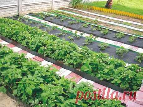 Cunnings of gardeners | the Kitchen garden without efforts
